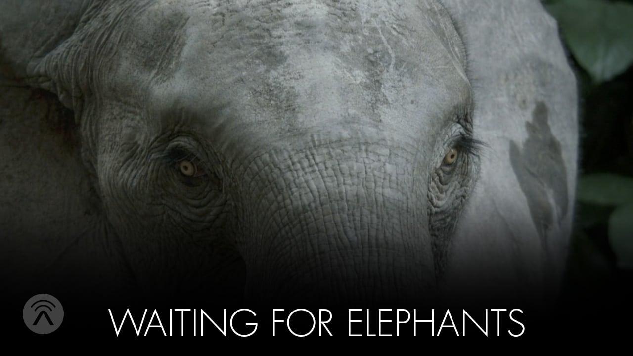 waiting for elephants
